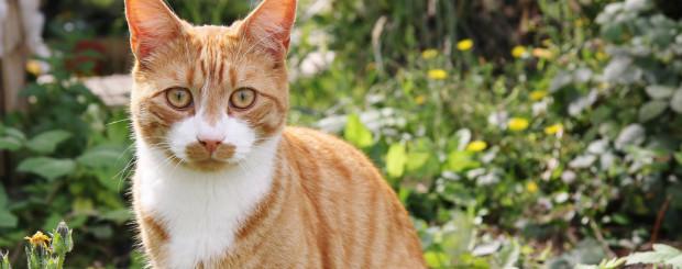 Ginger Cat in Park