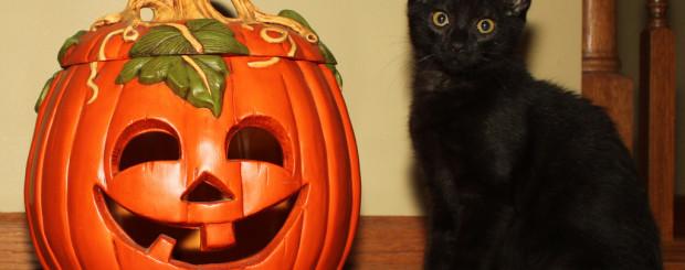 Halloween Pumpkin and Kitten