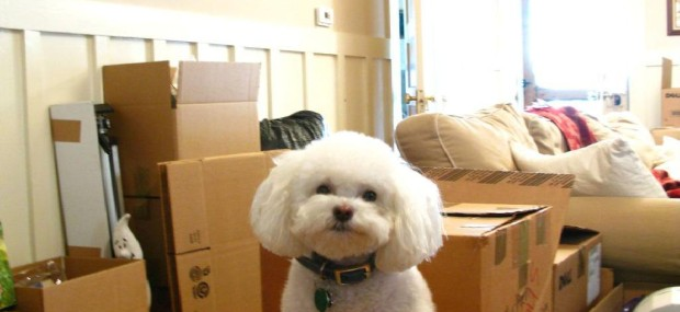 moving boxes and pet dog